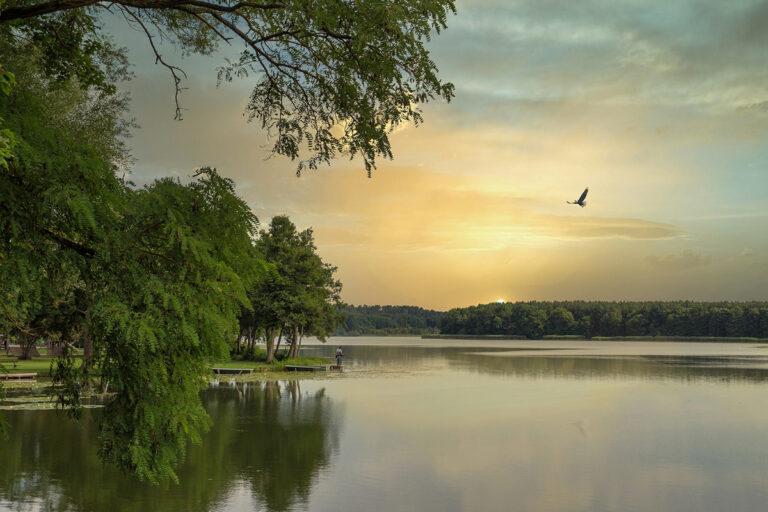 Deine Fasten Reise_Feldberger Seenlandschaft Seeufer Vogel