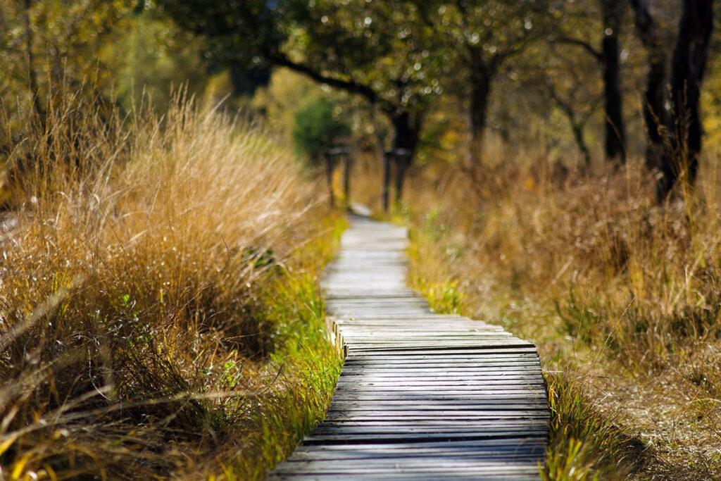 Deine Fasten Reise_Feldberger Seenlandschaft Steg Moor