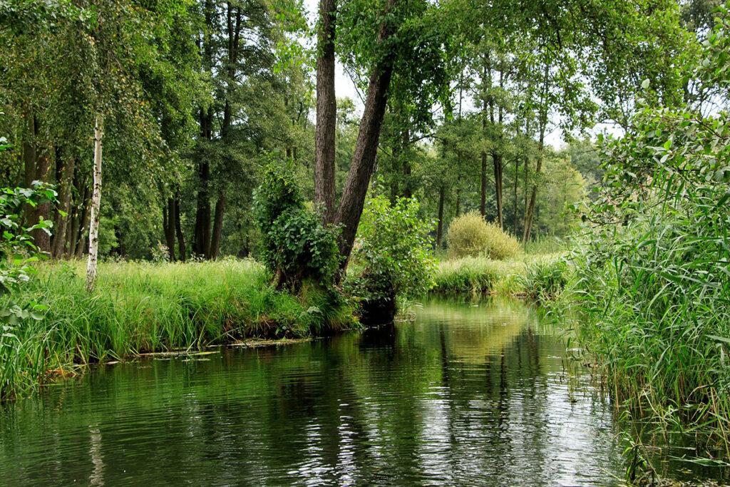 Spreewaldkanal mit grünem Ufer und vielen Bäumen