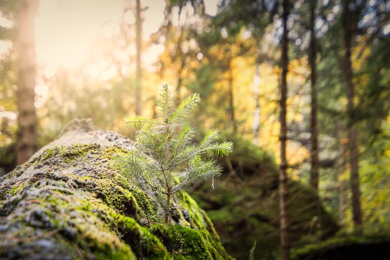 forest-2942498_1920