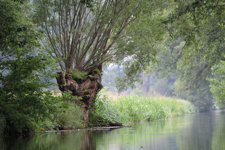 Wasserkanal umgeben von Pflanzen und einer Weide